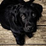 Planujesz dziecko? Powinnaś uśpić psa.