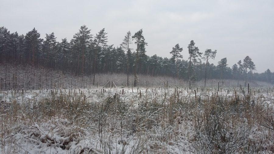 zima12