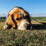 Wakacje – czas pozbyć się psa