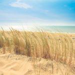 Plaża zieloną cebulką usiana – z oka przymrużeniem