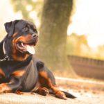 Wystawa psów – twoja głupota bywa groźna