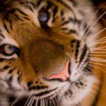 Gatunek bloger – prosimy o dokarmianie zwierząt