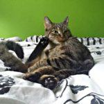 Kocie drobiazgi dla mar(kot)nej Aryi