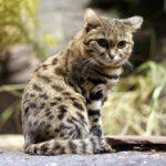Najmniejsze zwierzęta świata – 8 gatunków miniaturowych zwierząt