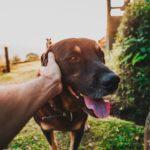 Dzień psa – czy pamiętasz tego najukochańszego?