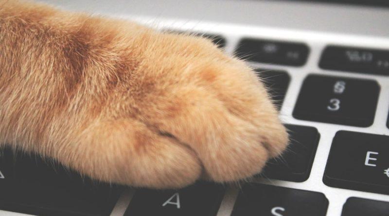 dbaj o kota