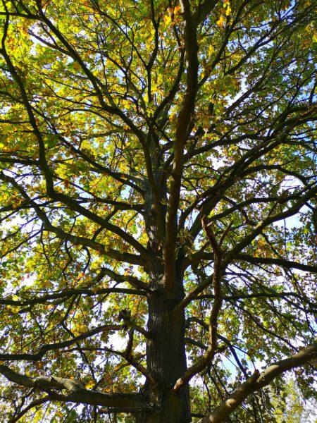 drzewo wyjechać